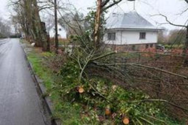 Hulpverleningszone Zuid-West-Limburg ontving 467 oproepen voor stormschade