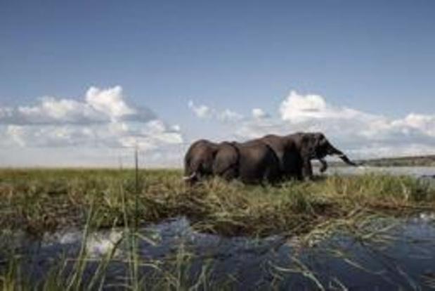 Olifanten vertrappelen twee mensen in Botswana