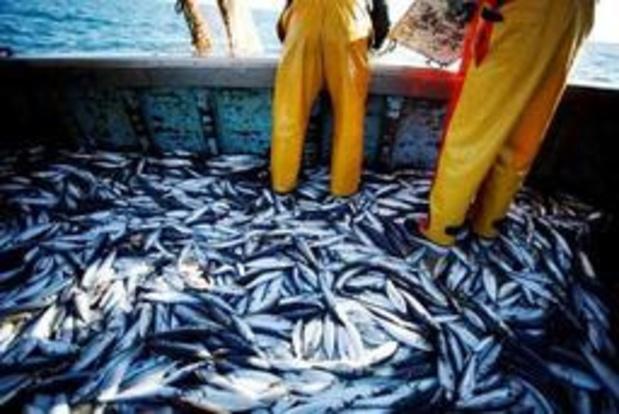 """""""Europese vis is opgebruikt voor dit jaar"""""""