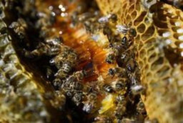 """Miel: récolte française """"catastrophique"""" en vue, à cause du climat"""