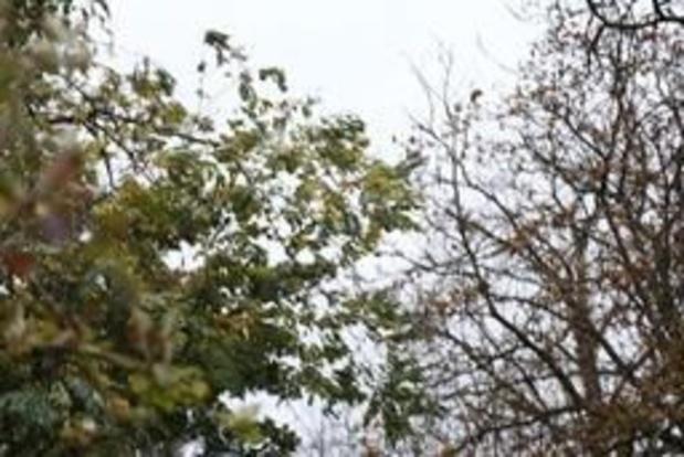 Météo - Un mercredi ensoleillé avec un désagréable vent de nord-est