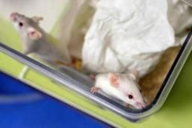 Onderzoekers schakelen hiv-virus uit bij besmette muizen