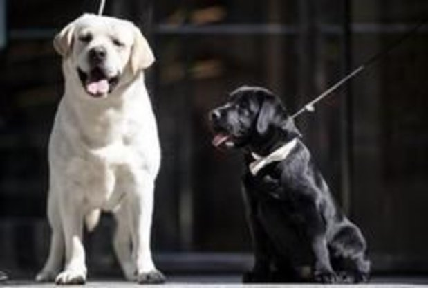 """30 millions d'Amis dénonce la vente """"honteuse"""" de 200 chiens à un """"élevage-usine"""""""