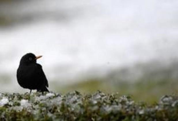 Alerte rouge pour la biodiversité en Flandre
