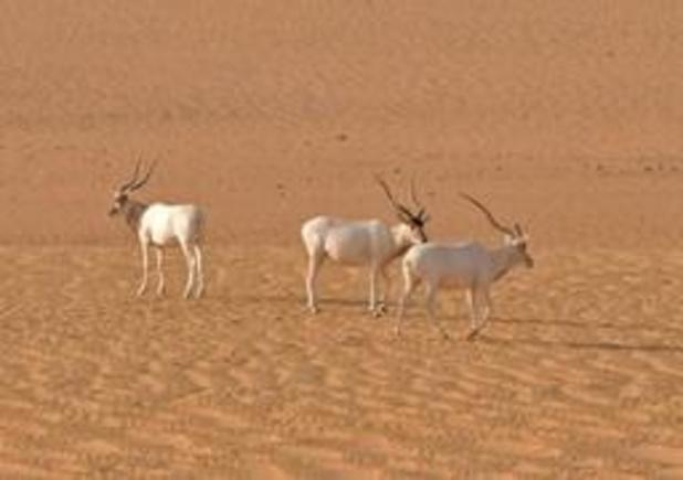 Grootste natuurreservaat van Afrika bedreigd door olie-ontginning