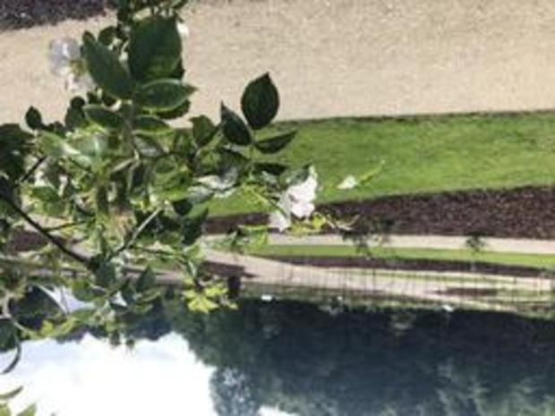 Plantentuin Meise opent unieke rozentuin met historische rozen