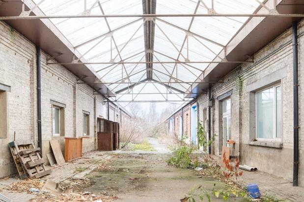 Festival Horst ontpopt zich tot beweging op voormalig militair terrein in Vilvoorde