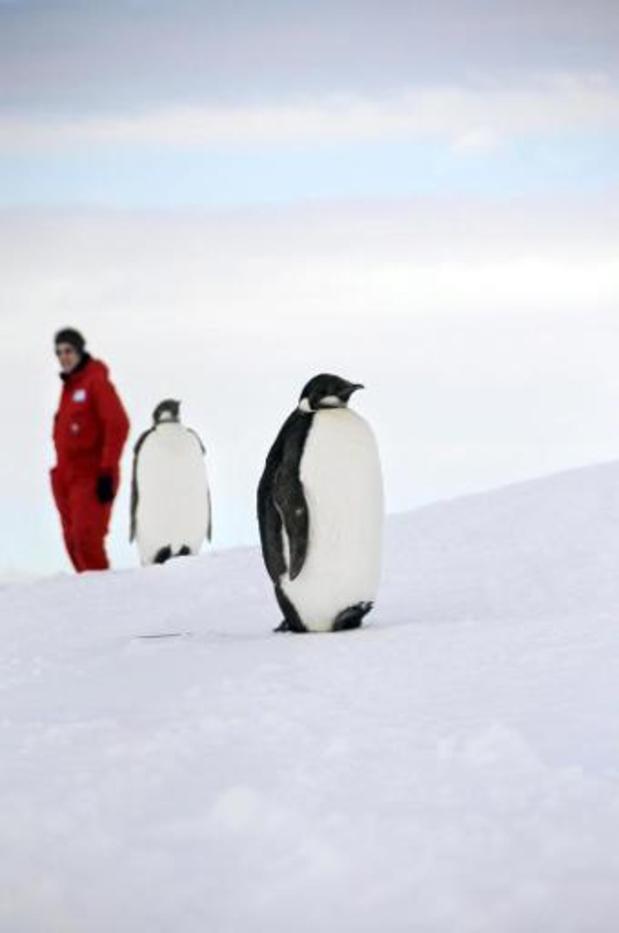 Via satellietbeelden zijn nieuwe pinguïnkolonies ontdekt op Antarctica