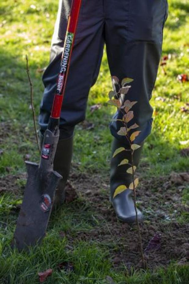 """Meer dan zeventienduizend nieuwe bomen voor """"coronahelden"""""""