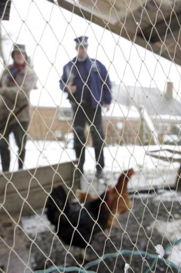 Uitbraak van vogelgriep in Henegouwen