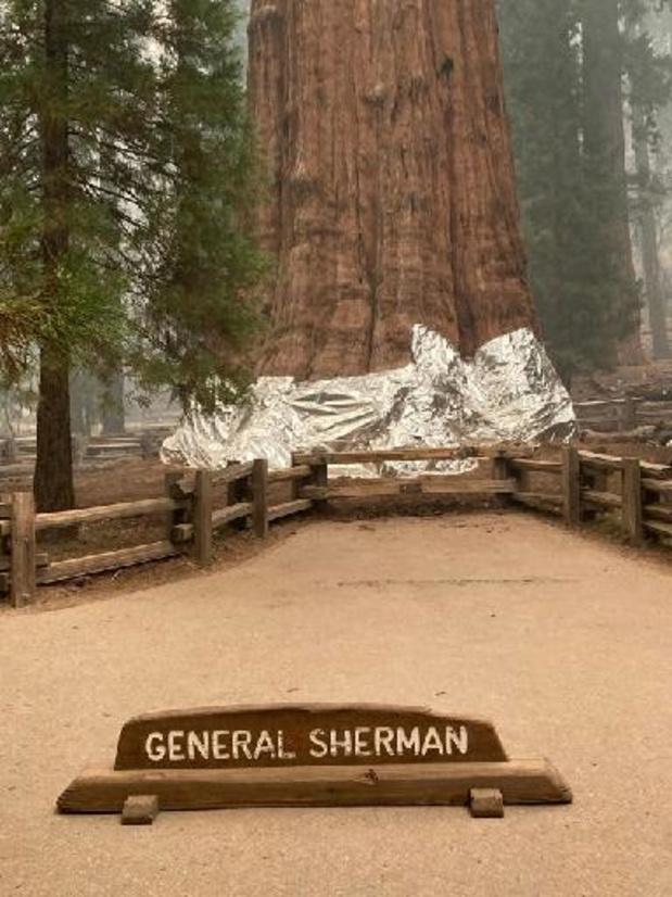 USA: des séquoias emballés dans de l'aluminium pour les protéger des incendies