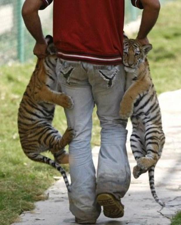 """""""Illegale handel van wildlife hoger op politieke agenda"""""""