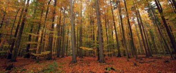 Klimaatresolutie Vlaams parlement vraagt 'haalbare en betaalbare' ambitieverhoging op Europees niveau