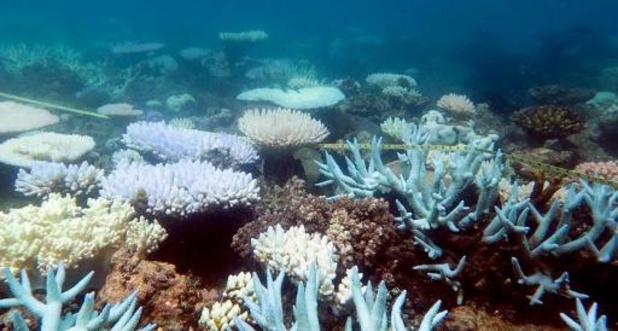 Great Barrier Reef derde keer op vijf jaar tijd massaal verbleekt