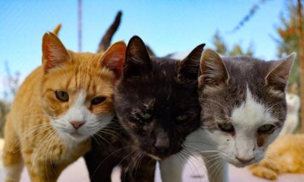 Voedingsspecialist opent obesitaskliniek voor honden en katten