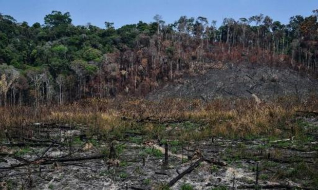 Brésil: ONG et agro-négoce unis contre la déforestation