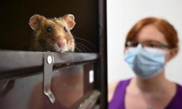 Griepmiddel werkt bij hamsters tegen coronavirus