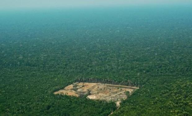 Rapport over handel in illegaal gekapt Amazonehout noemt twee Belgische bedrijven
