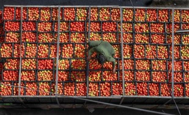 Les cultivateurs de fruits et légumes demandent la libre circulation des saisonniers