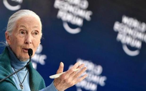 La primatologue Jane Goodall nommée docteur honoris causa de l'université d'Hasselt