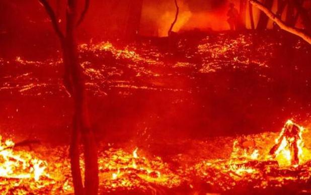Al 1,6 miljoen hectare vernield door bosbranden in Californië