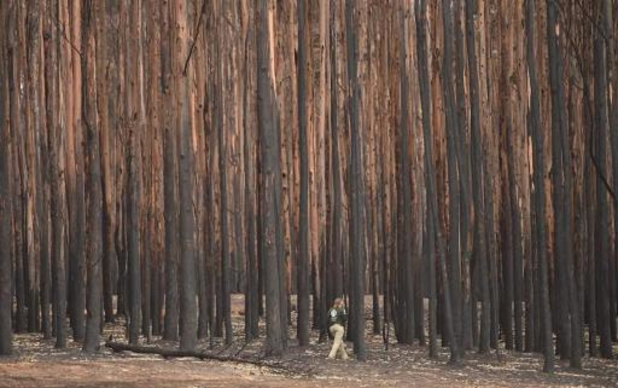 Bosbranden Australië: twintig procent van bossen vernietigd