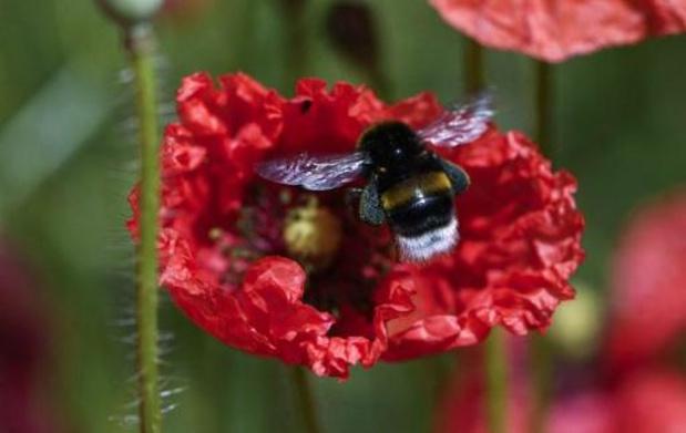 Les mesures de l'Europe en faveur des abeilles sont inefficaces, selon un rapport
