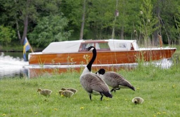 Natuur en Bos vangt Canadese ganzen om populatie in te tomen