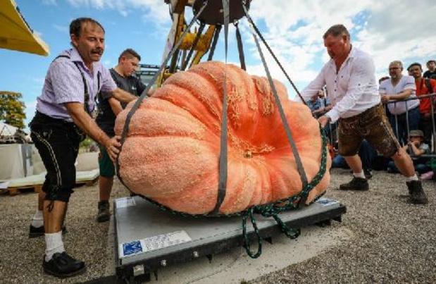 Le plus gros potiron d'Europe vient d'Italie, le deuxième de Belgique