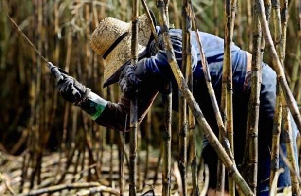 Bolsonaro rétablit les plantations de canne à sucre en Amazonie