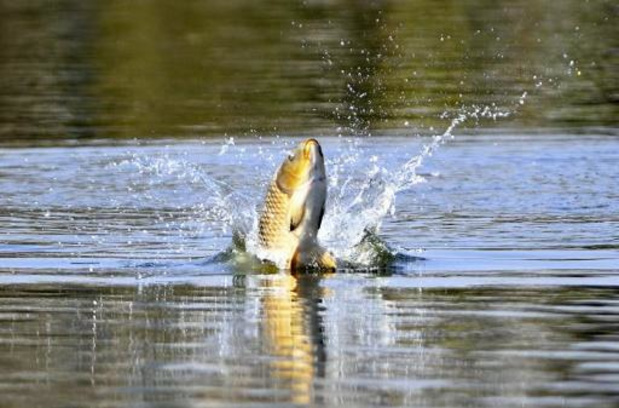 Vis doodt visser