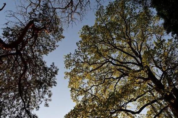 Brussel Mobiliteit voorziet bomen van technologie die aangeeft wanneer ze 'dorst hebben'