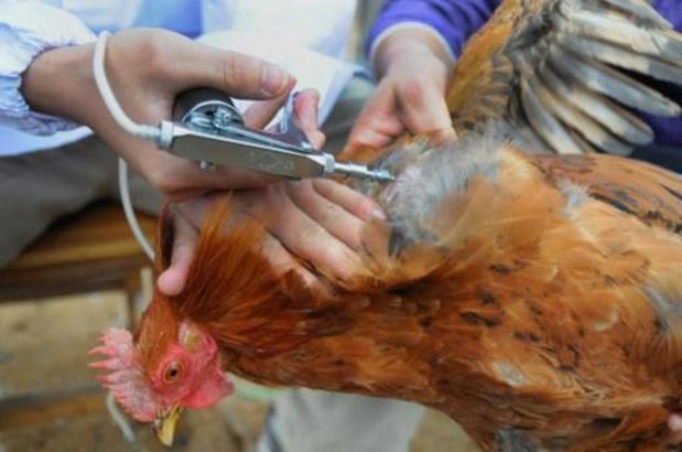 Vlaamse regering vergoedt pluimveebedrijven na uitbraak vogelgriep