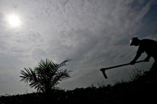 Le soja et l'huile de palme bientôt exclus des biocarburants en Belgique
