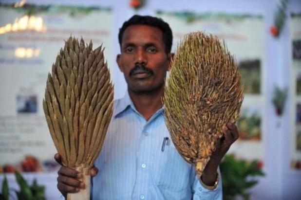 India kondigt grote investering in omstreden palmolieteelt aan