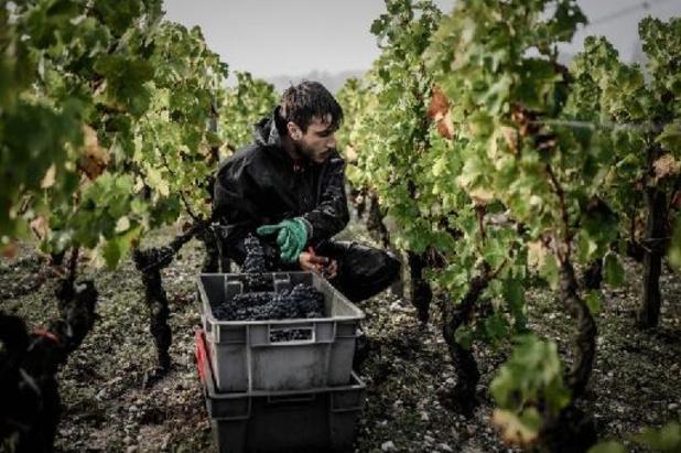 France: le vignoble bordelais s'attend à une récolte petite mais de qualité