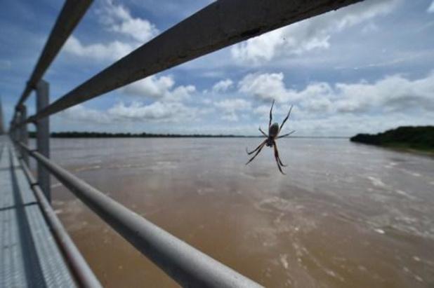 Des toiles d'araignées recouvrent une région australienne