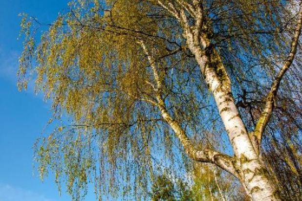La saison du rhume des foins démarre, avec les premiers pollens de graminées