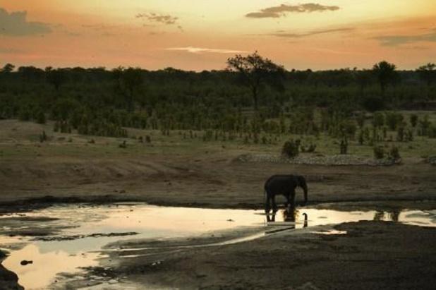 Opnieuw twaalf olifanten vermoedelijk door bacterie omgekomen in Zimbabwe