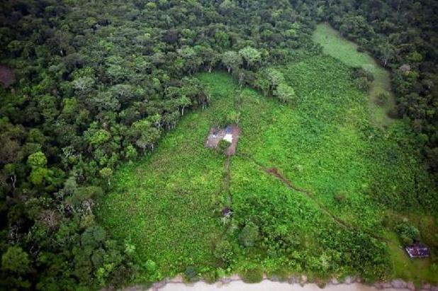 Amazonie, mammifères marins... l'UICN adopte différentes motions