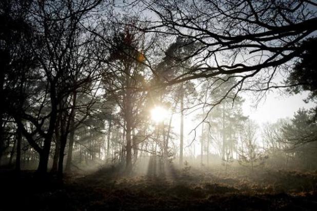 Ook in Limburgse bos- en natuurgebieden code oranje voor brandgevaar
