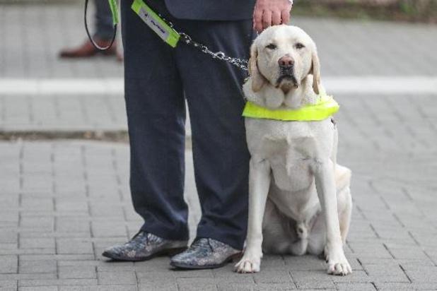 Les chiens d'assistance ne pourront plus être bannis dans les lieux publics en Wallonie