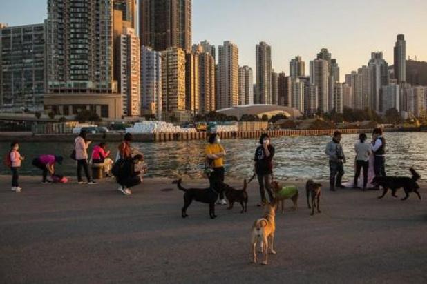 Ook huisdieren van coronapatiënten in quarantaine in Hongkong