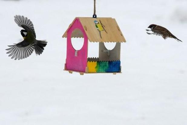 Vogels tellen in tuin of op balkon