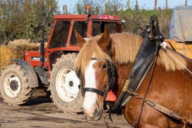 Vlaams-Brabant blijft inzetten op behoud Brabants trekpaard