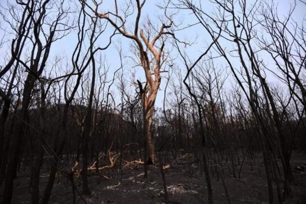 Australische deelstaat New South Wales verlost van verwoestende bosbranden