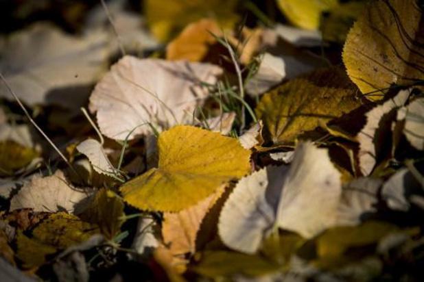 Bomen verliezen vroeg bladeren door droogtestress