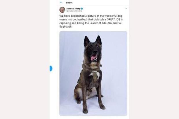 Le chien du raid contre Baghdadi invité à la Maison Blanche