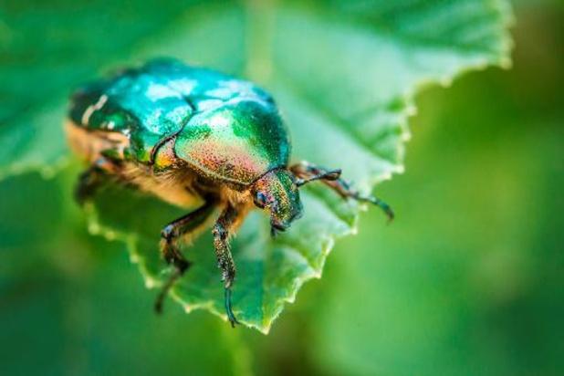 Des chercheurs belges découvrent quatre nouvelles espèces de coléoptères