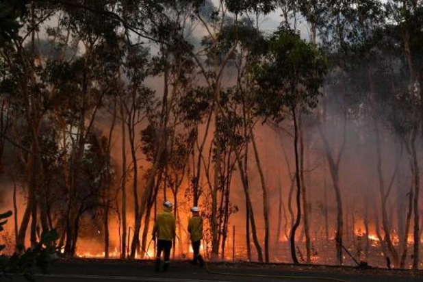 Bosbranden Australië - Toxische wolk nu ook boven Canberra